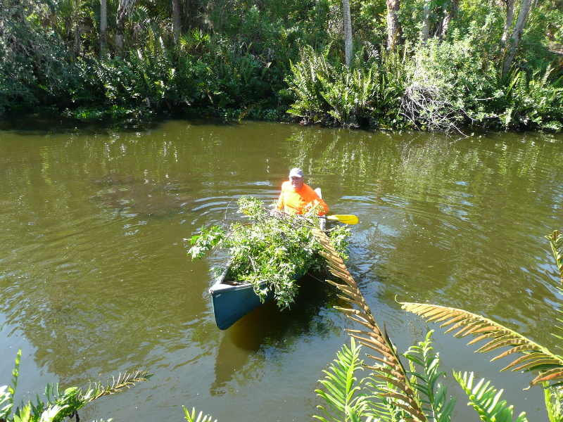 Volunteer in canoe with invasive plants