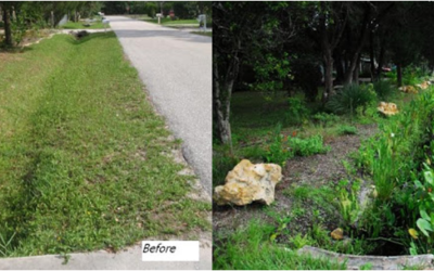How to Build a Rain Garden or Bioswale