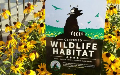 Certify Your Yard For Conservation