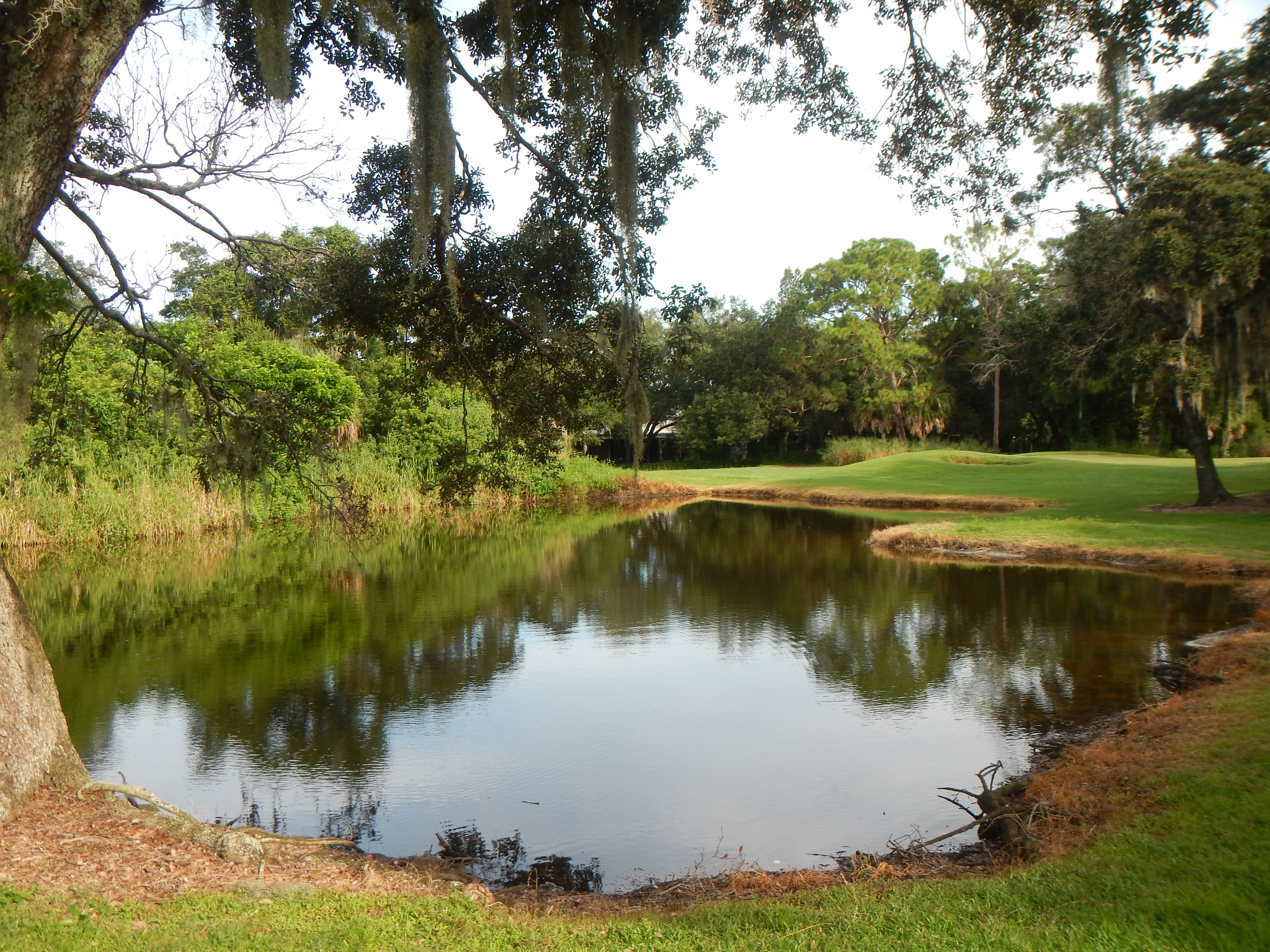 Wetland on Bobby Jones