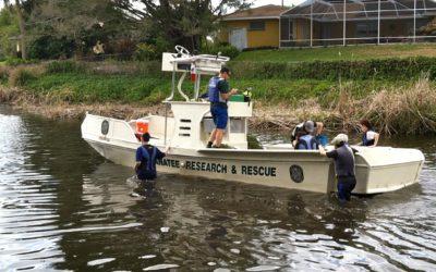 Baby Manatee Rescue
